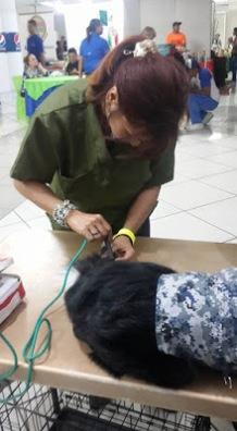 Laserpuntura como tratamiento post-operatorio